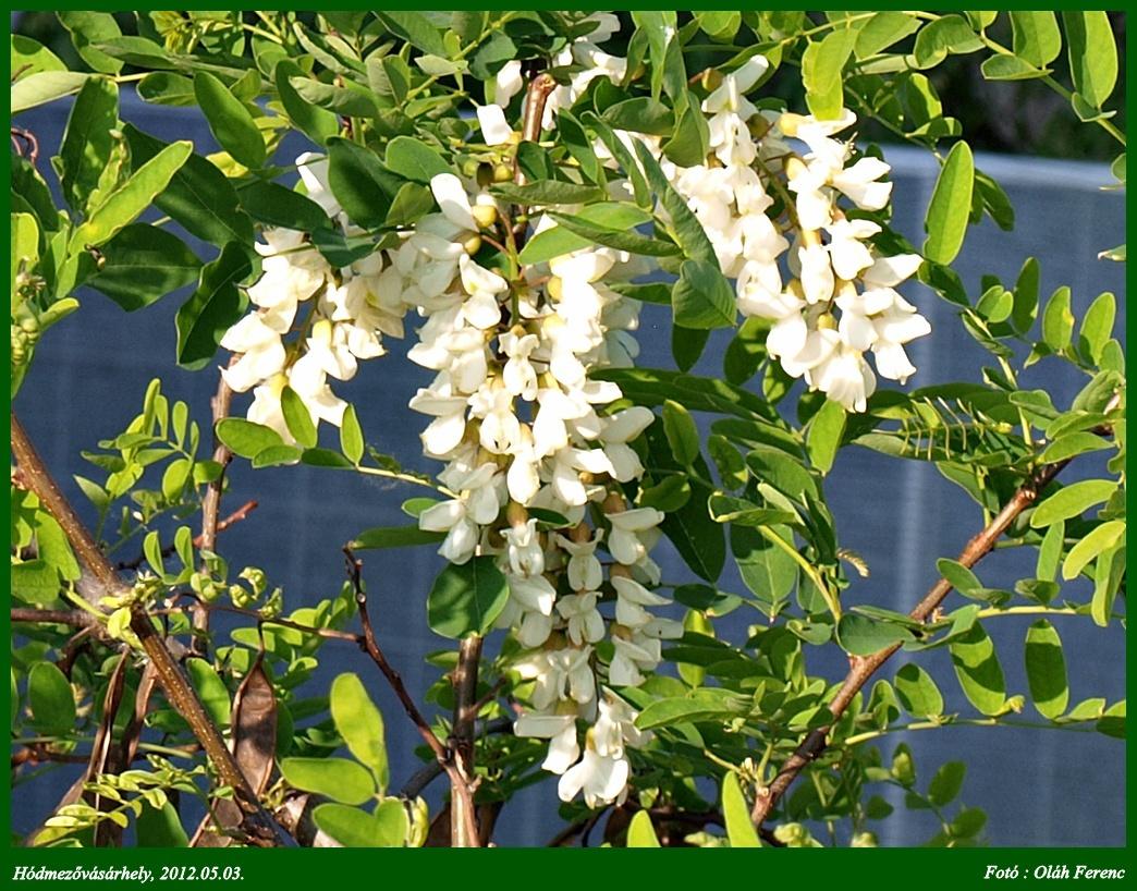 virágok 11