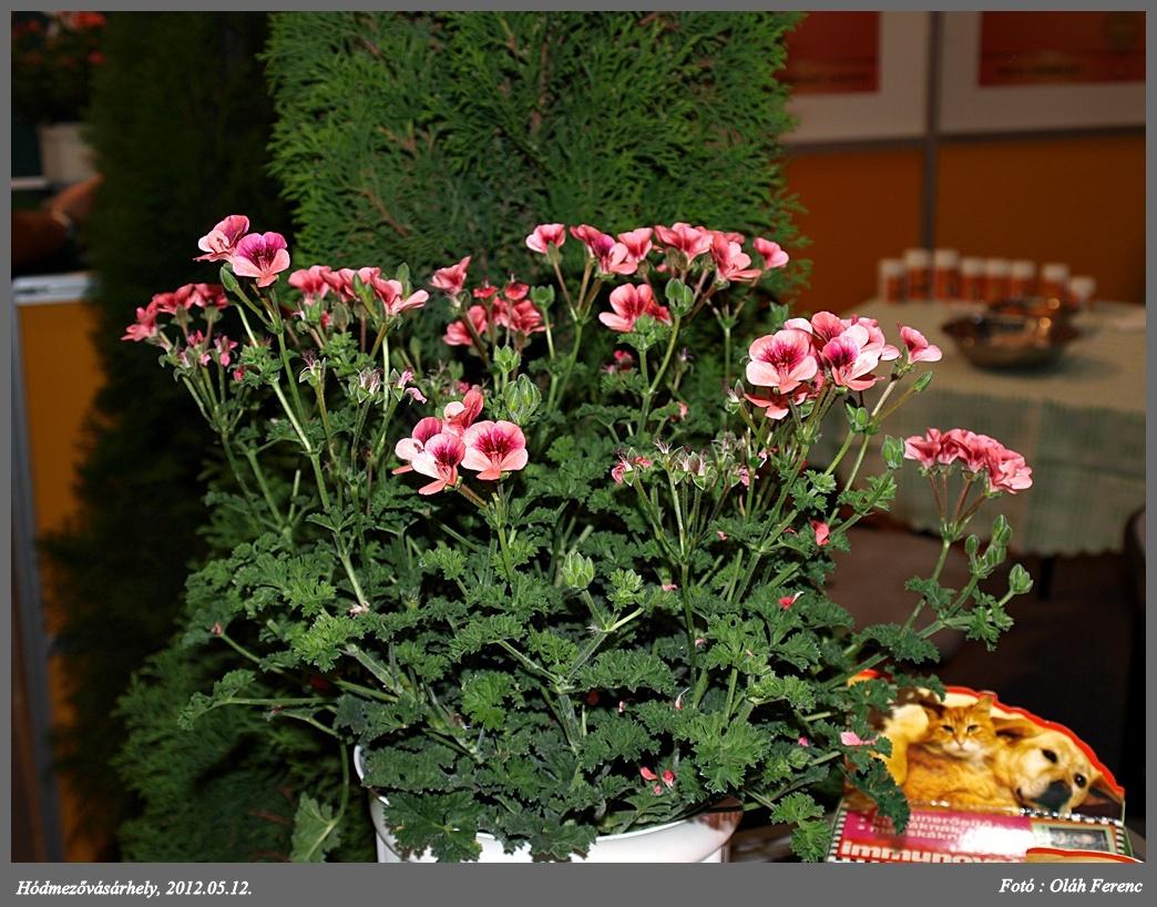 virágok 19