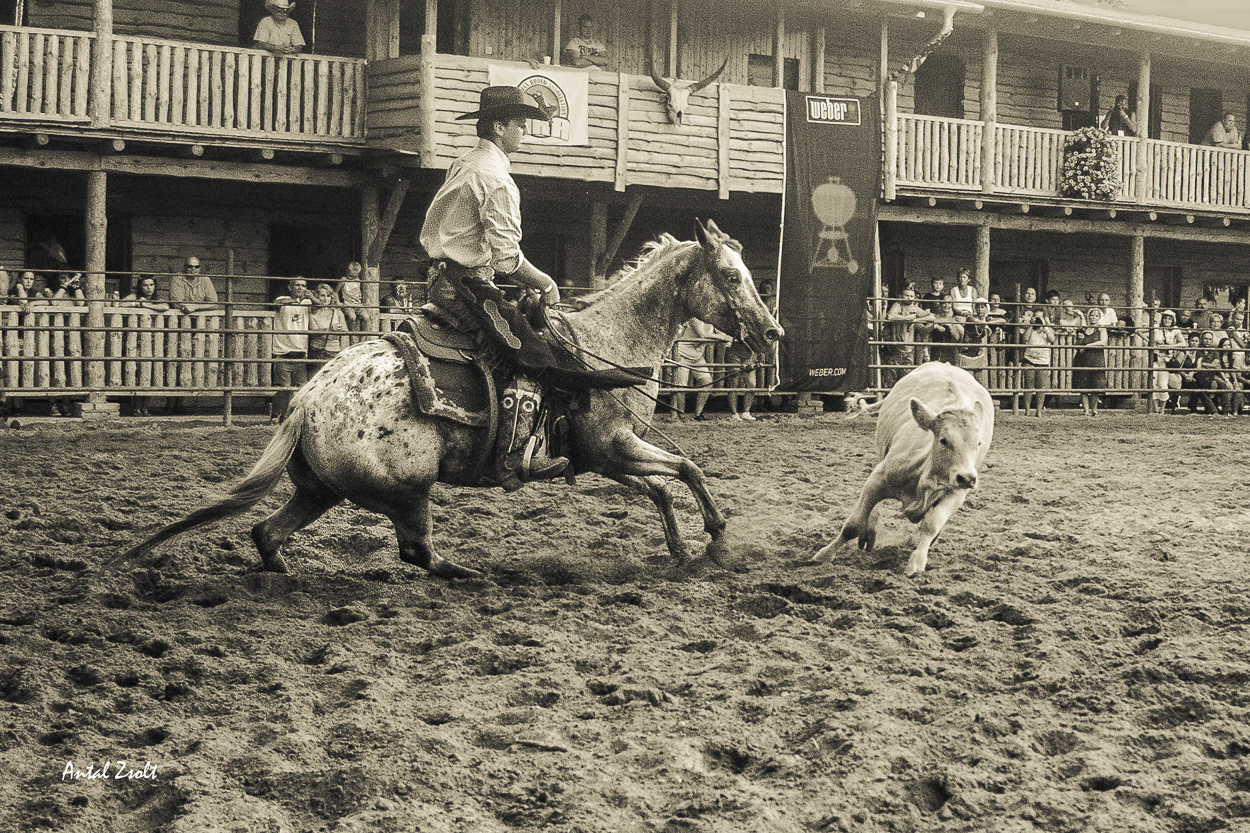 rodeo--3