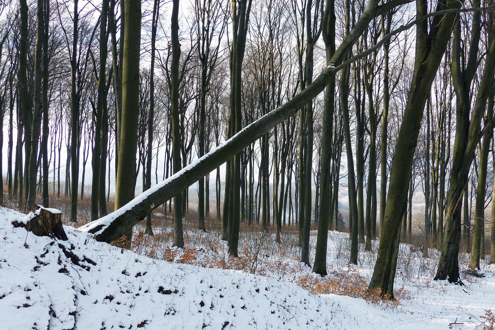 001 A békés erdő I.
