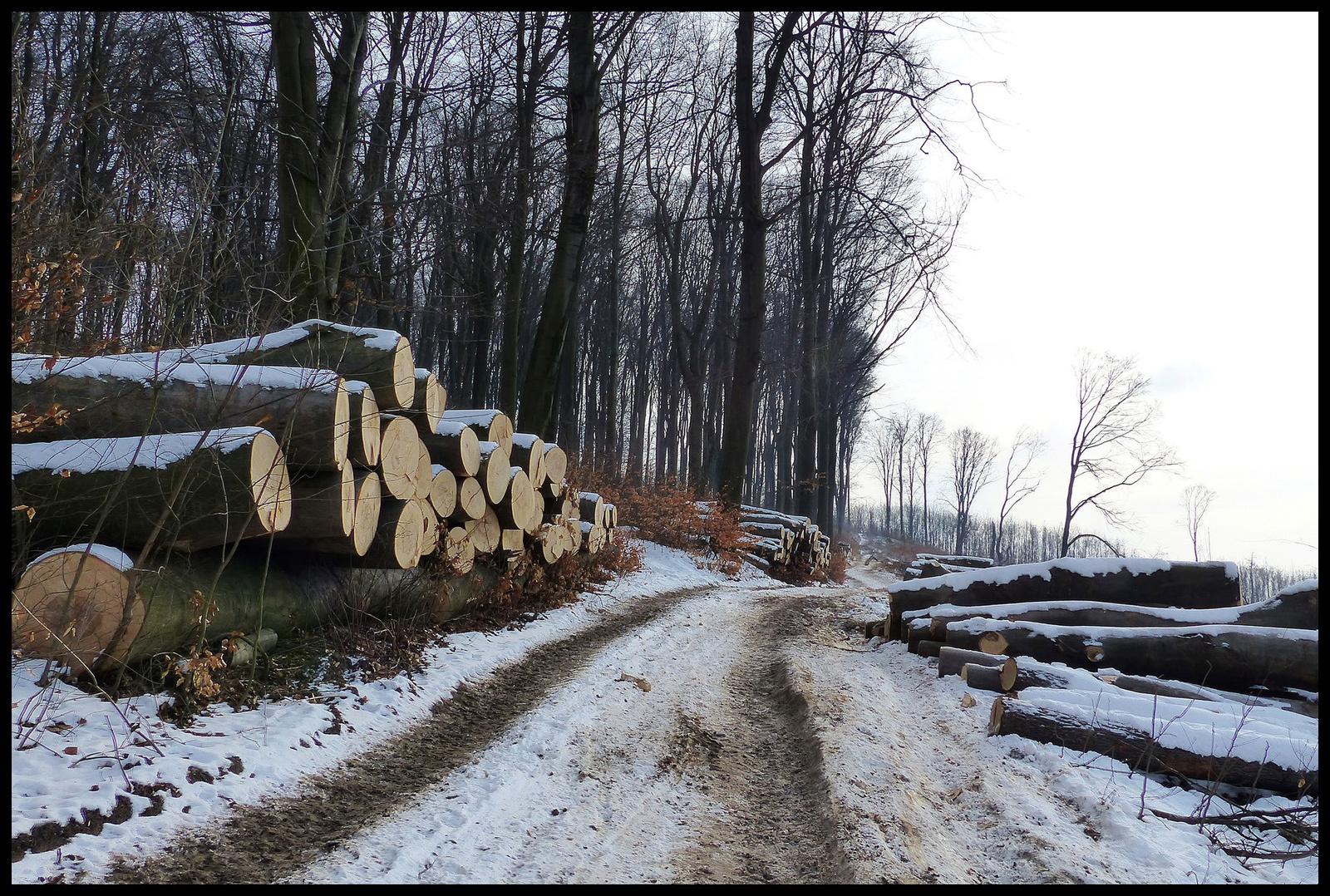 005 Az erdő végzete III.