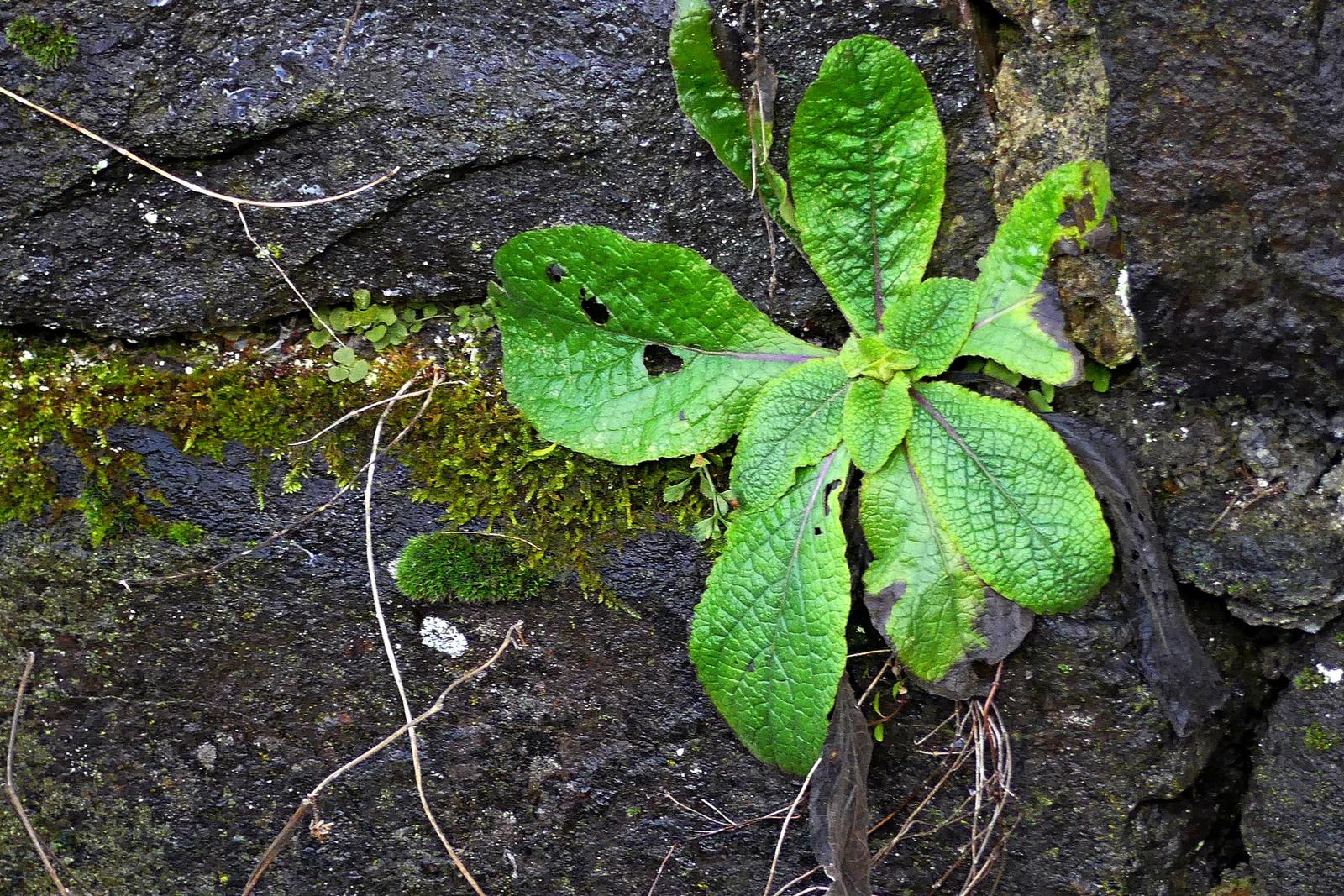 16 Zöld a kövek között