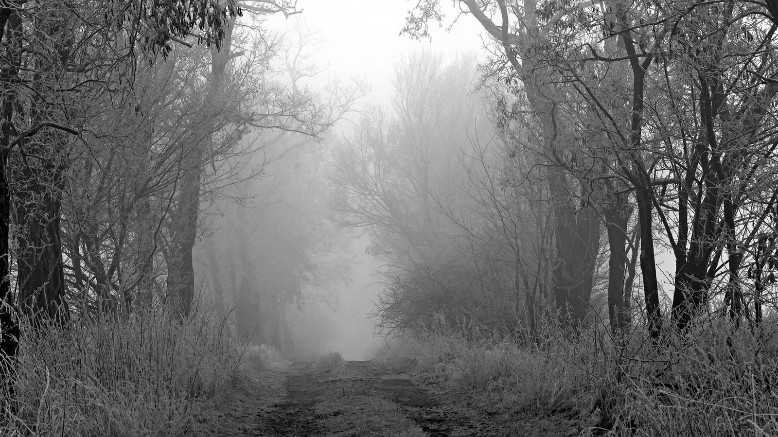 01 Erős ködben