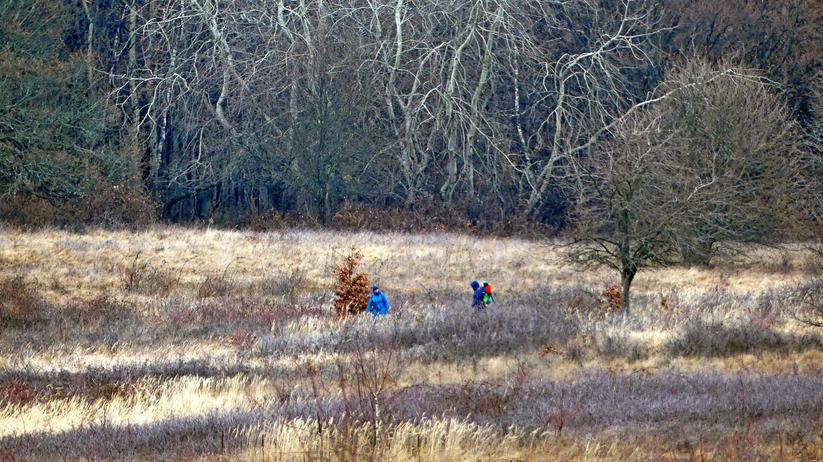 08 Fűben erdő szélén