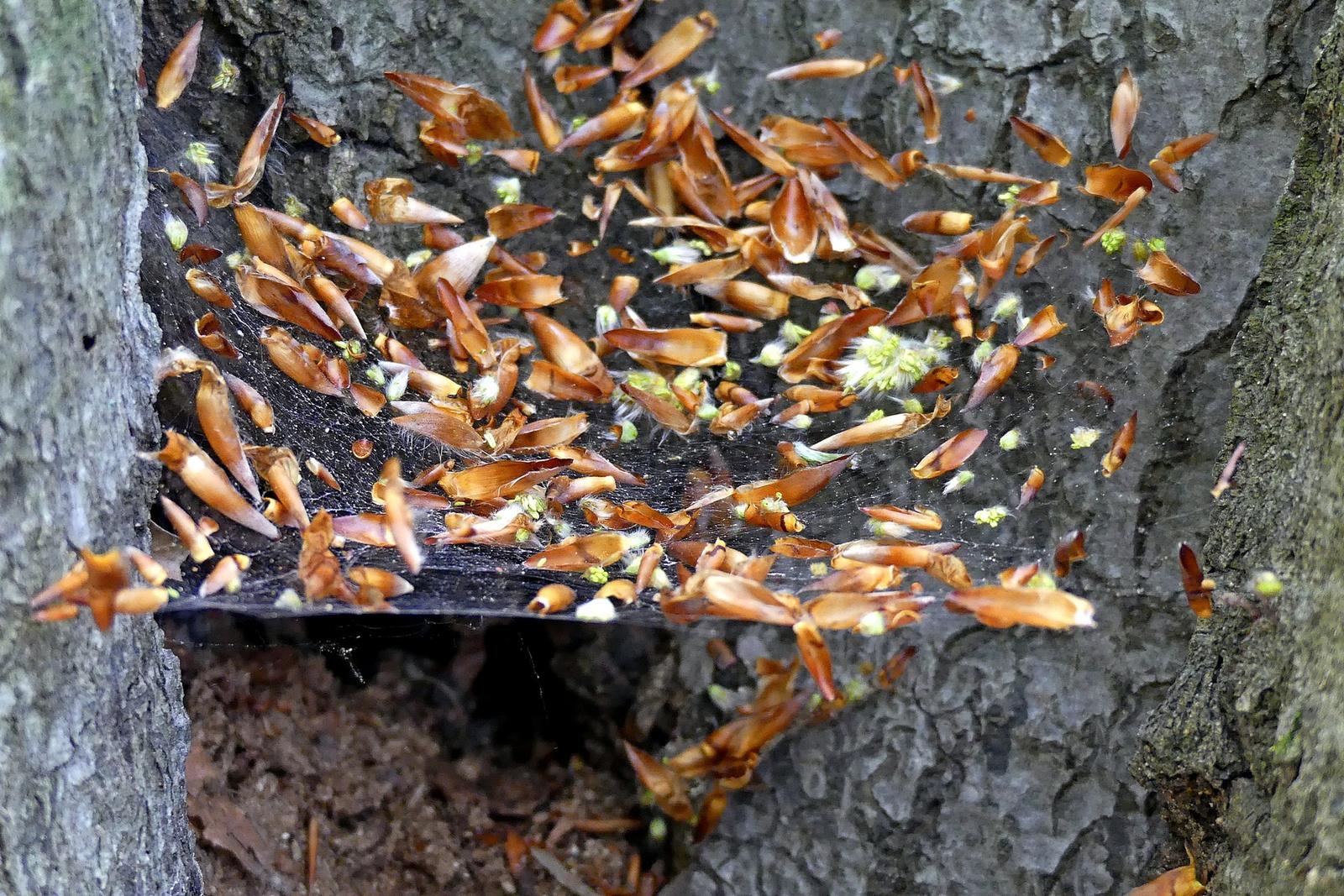 06 Tavaszi pókháló