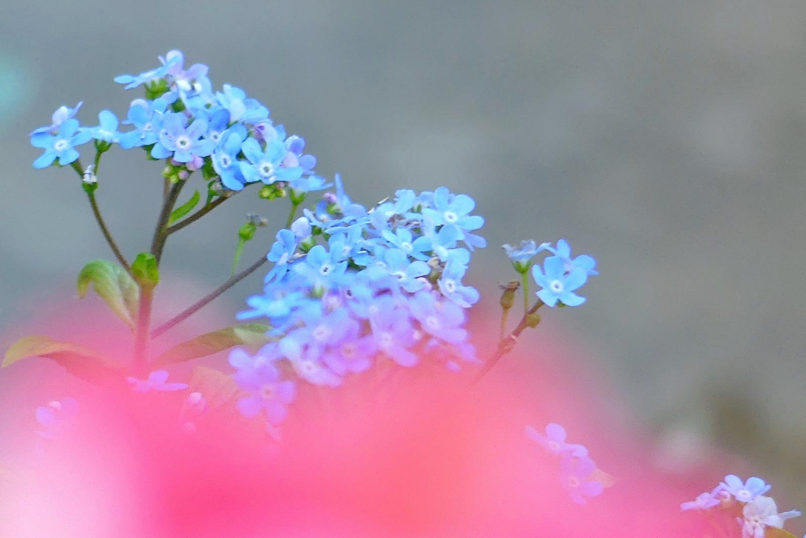 12 Tavasz virágai a kerékpárút mentén