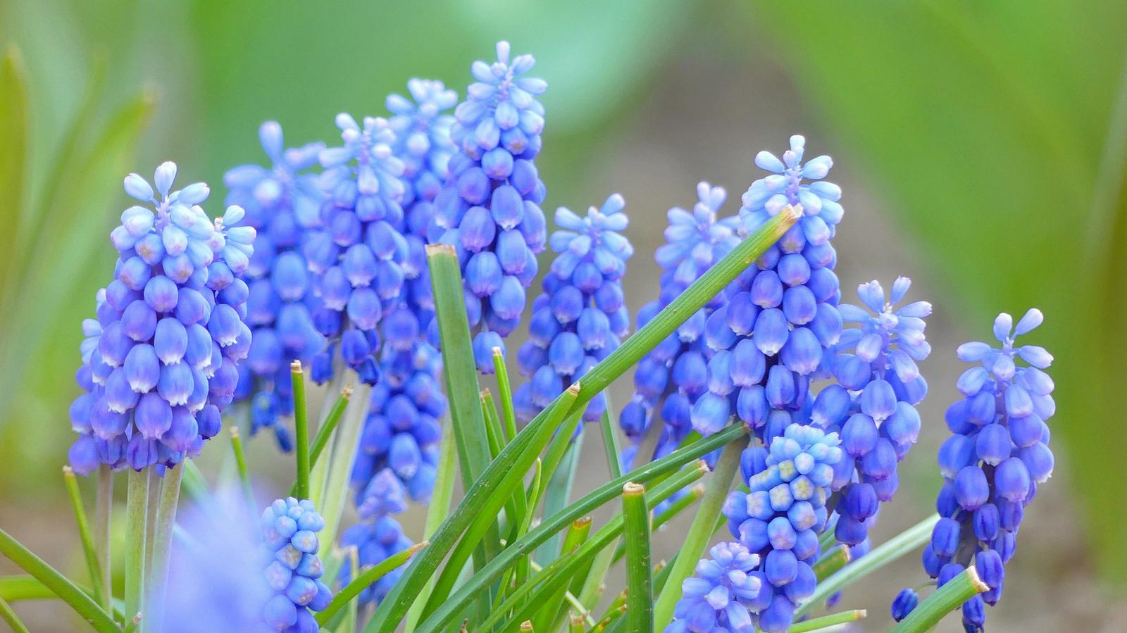 11 Tavasz virágai a kerékpárút mentén