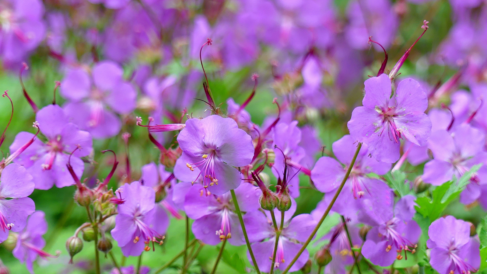 01 Lakótelepi virágok