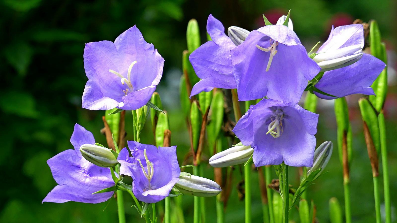 06 Lakótelepi virágok
