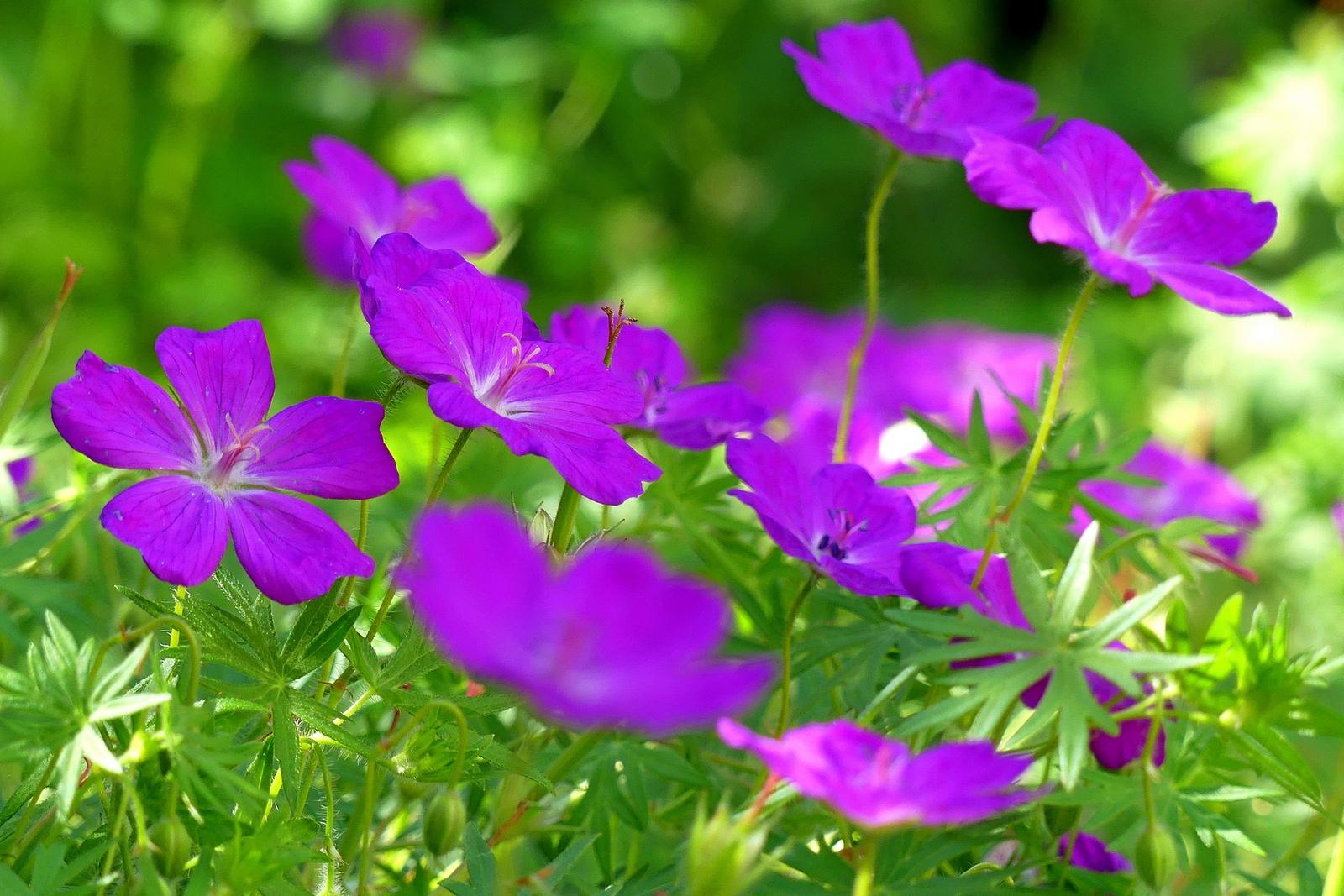 07 Lakótelepi virágok