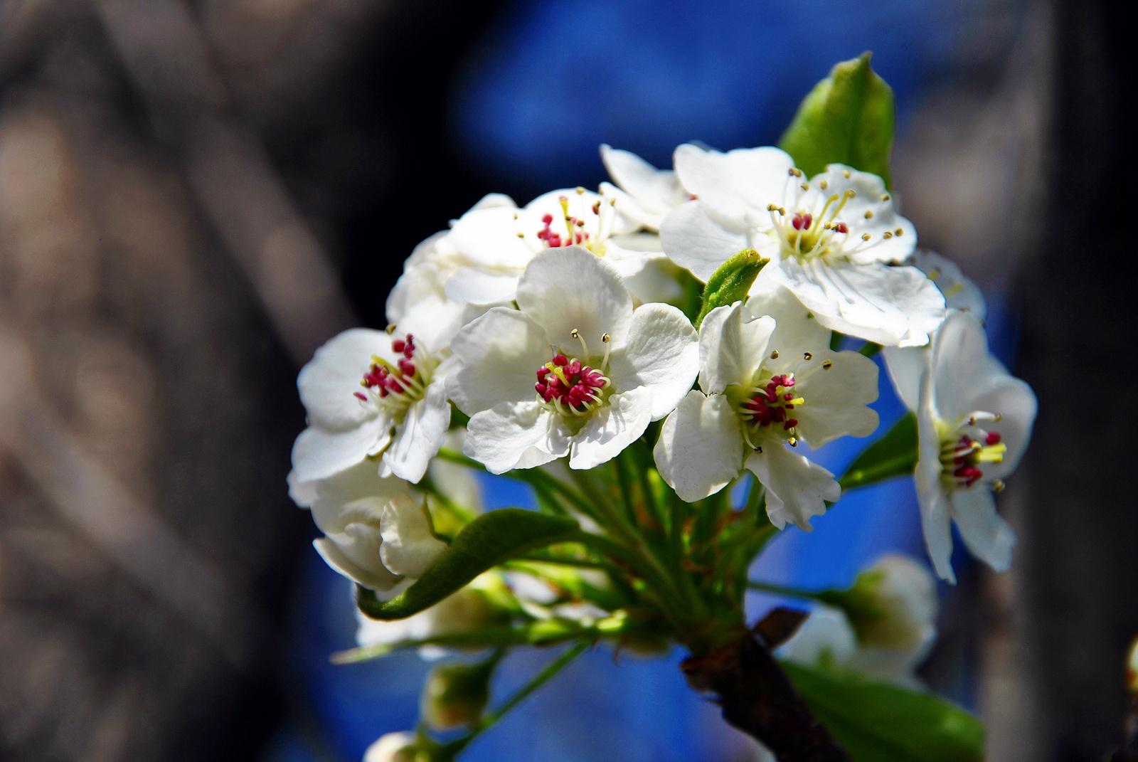Virágnyílás idején