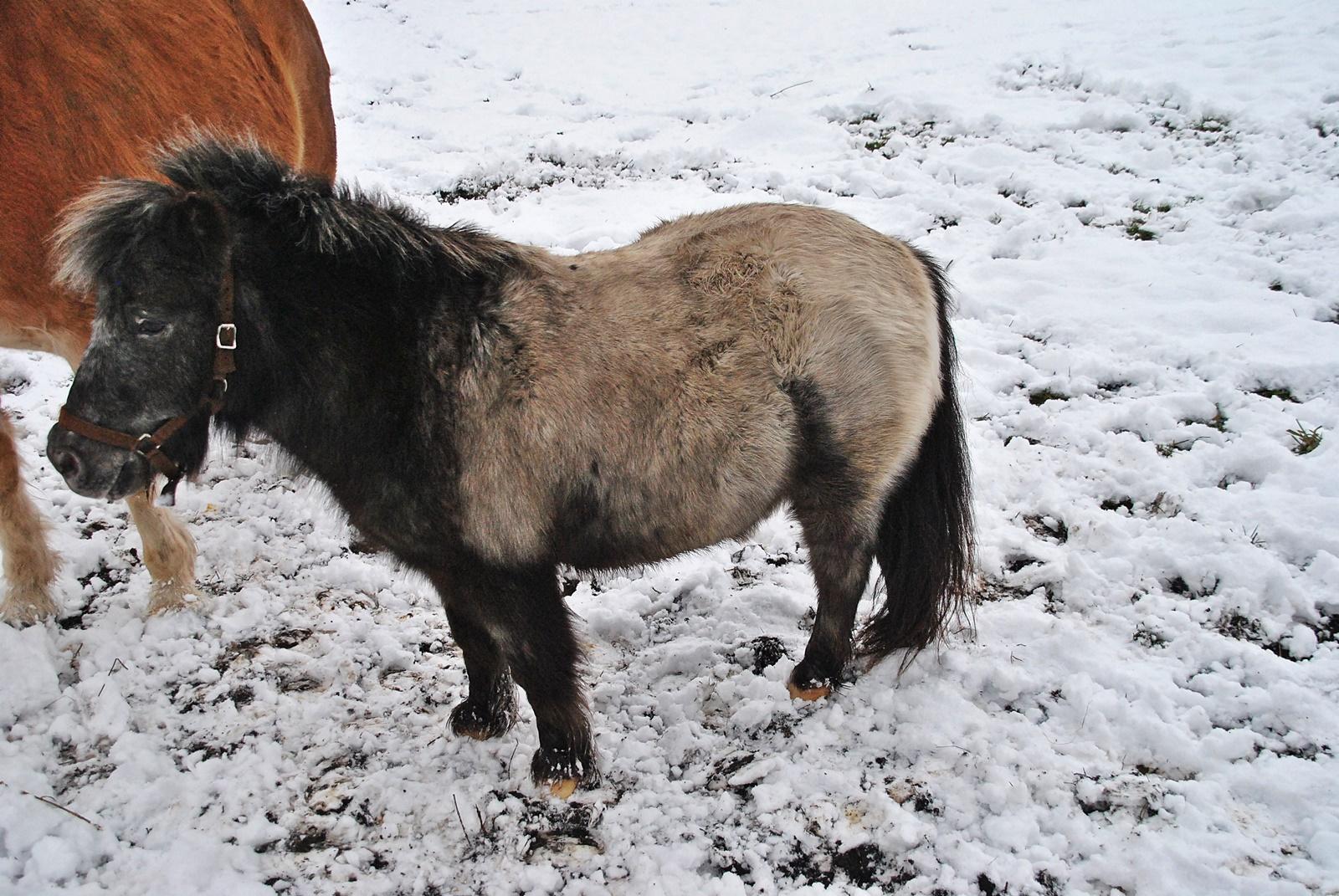 Kis hó - kis ló