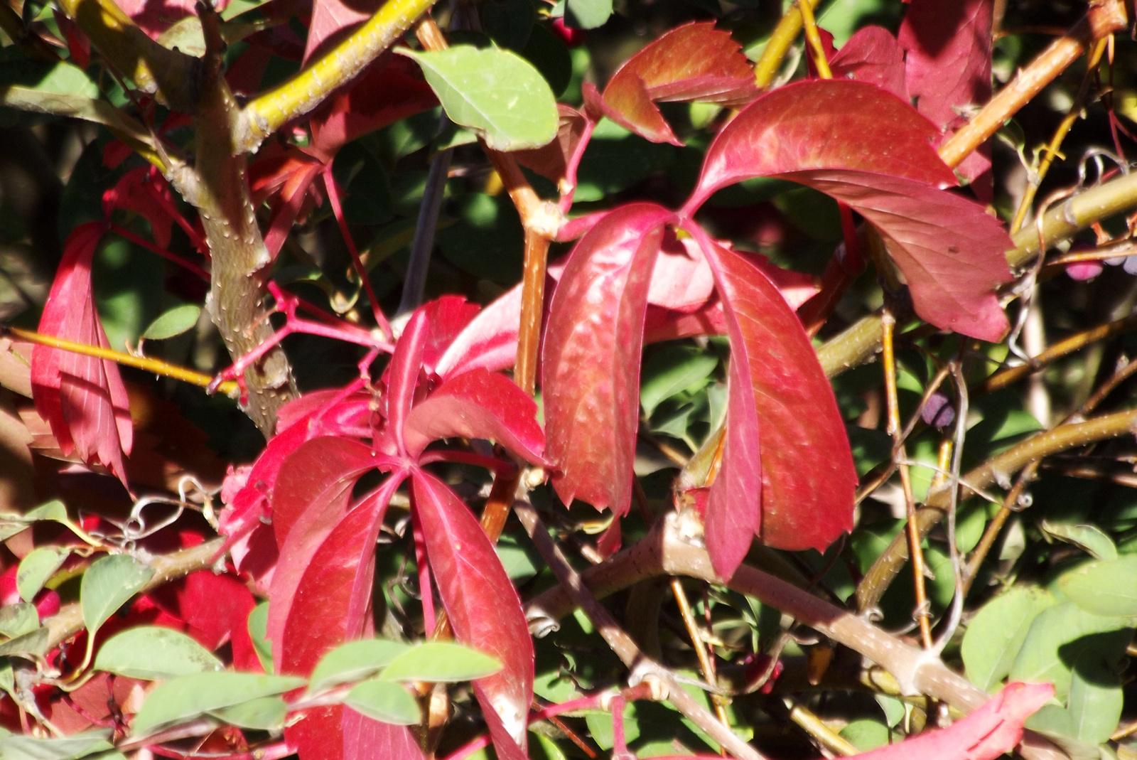 Őszi levelek 5.