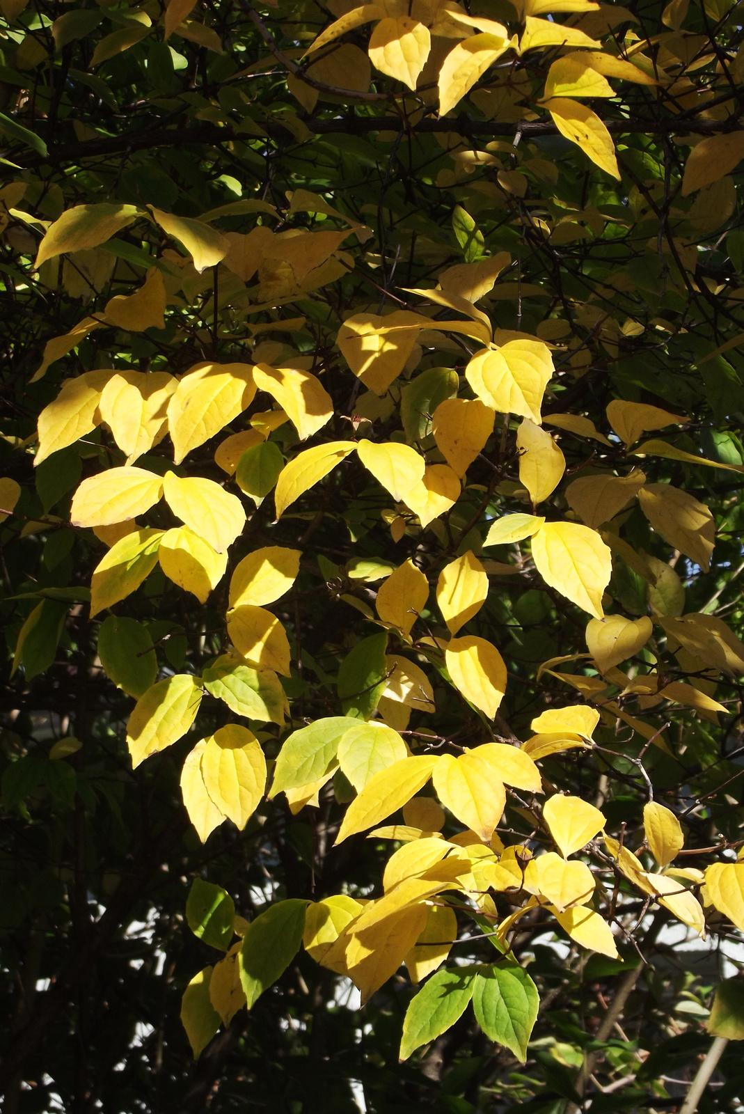 Napsütésben a levelek