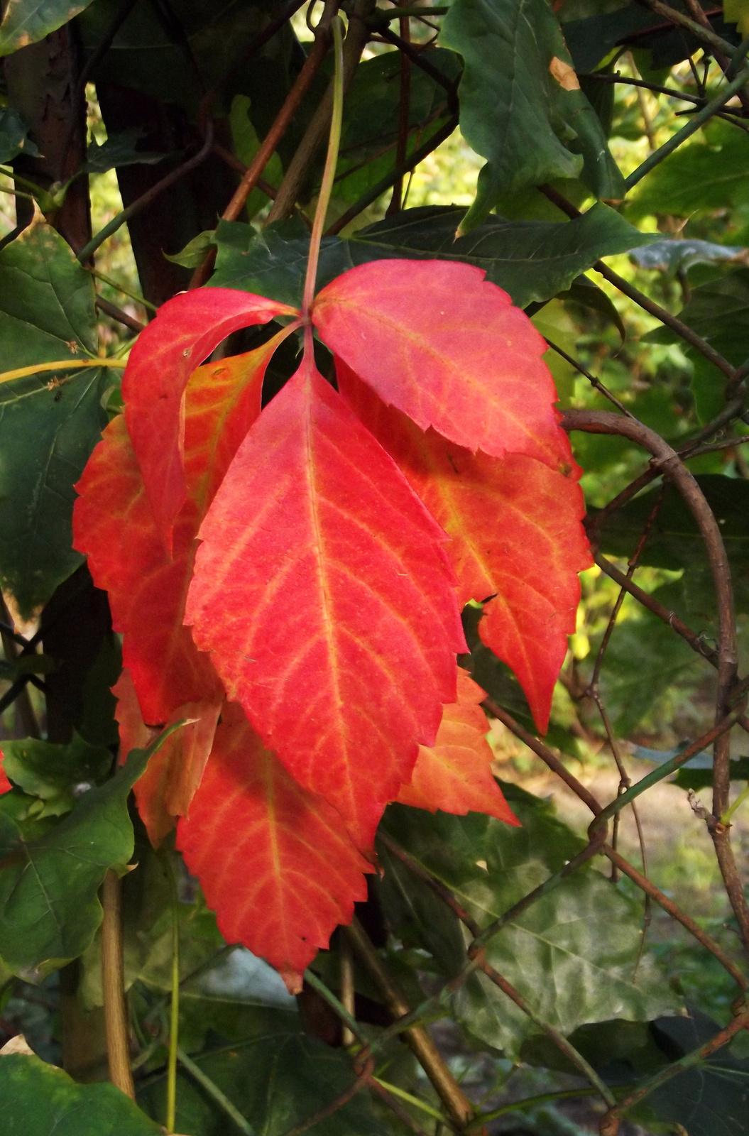 Őszi levelek 8.