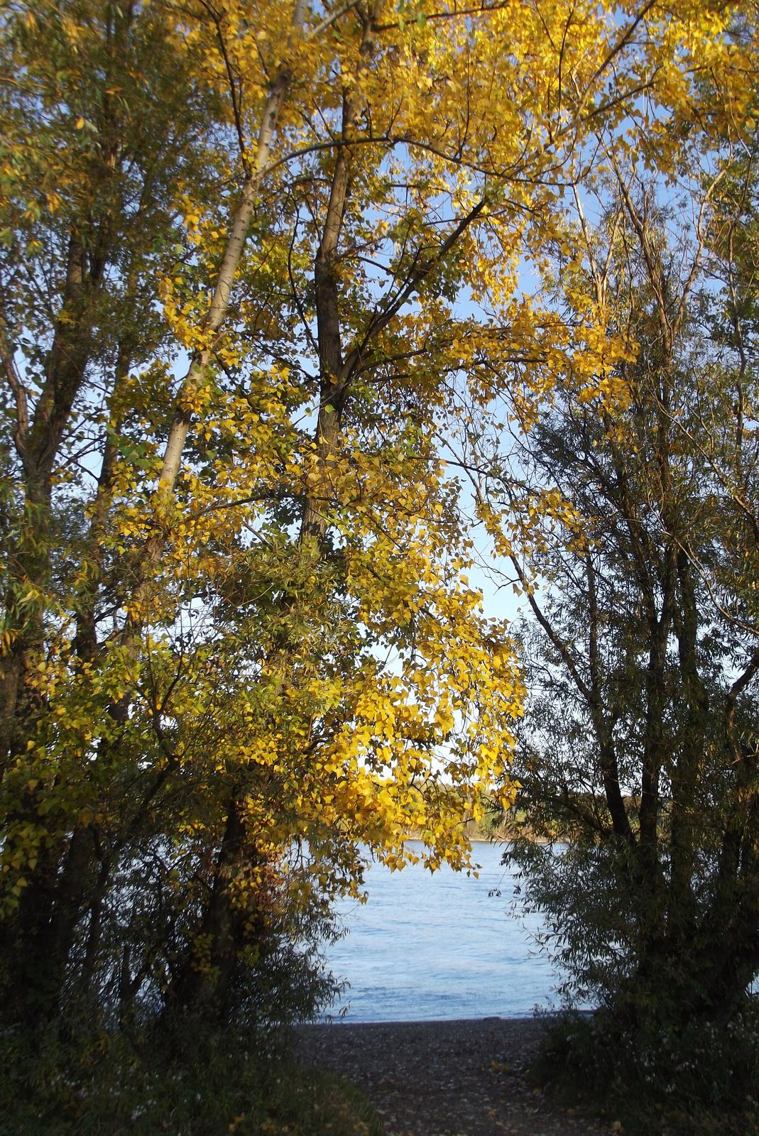 Duna-parti ősz