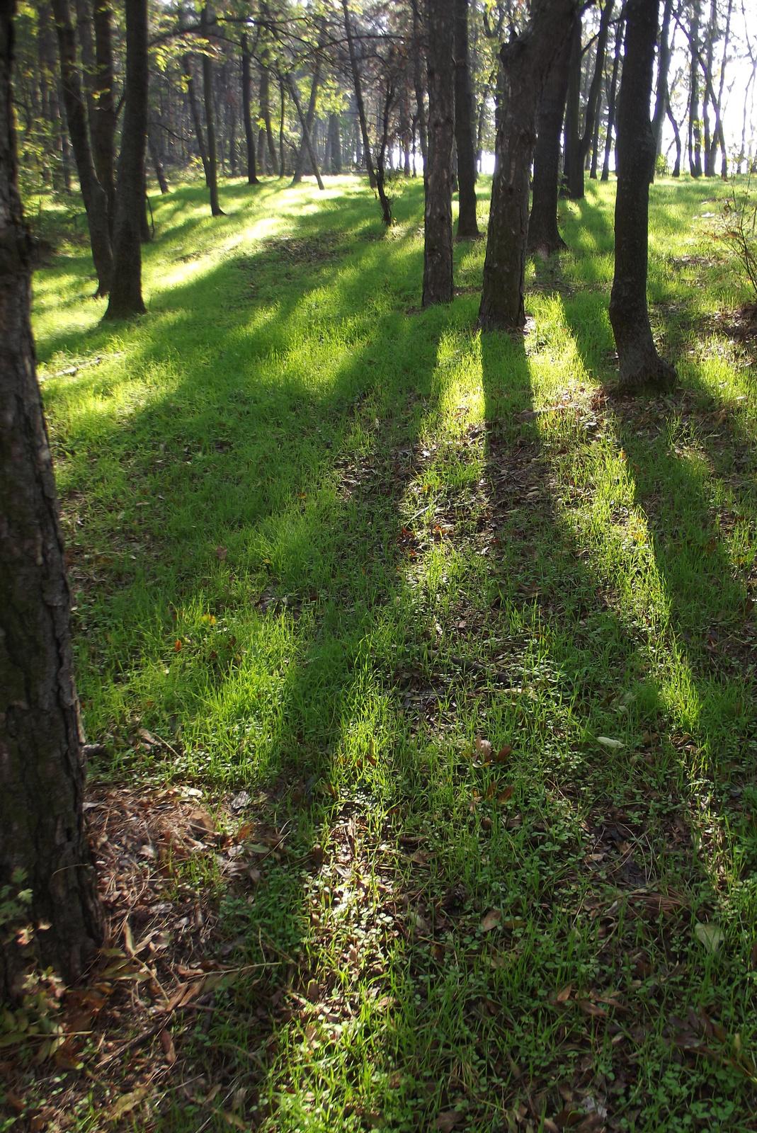 Fények és árnyékok