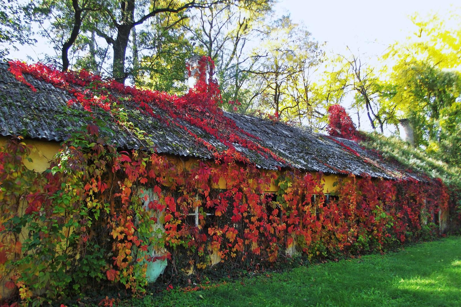 Leveles ház