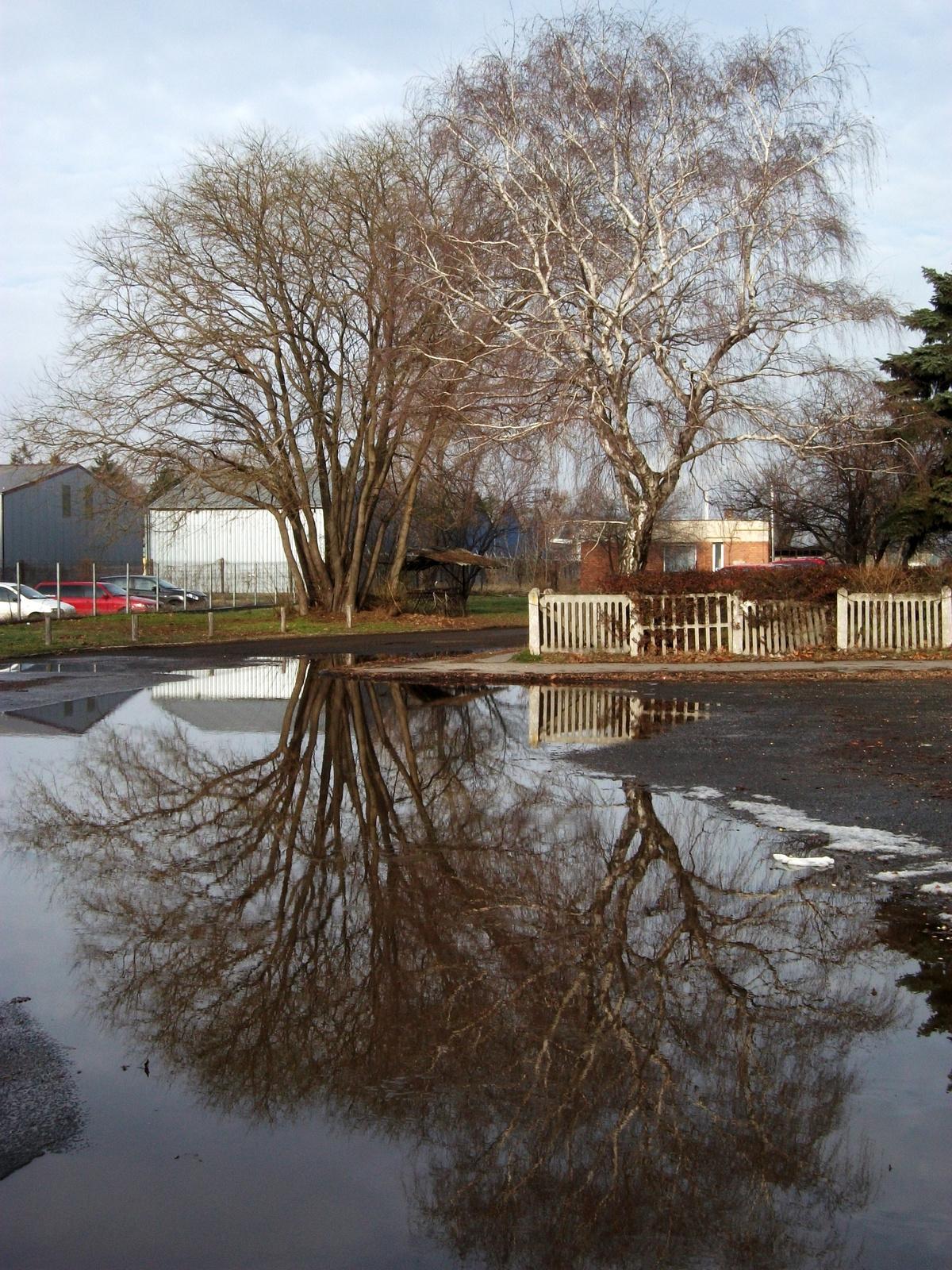 A fa és a tükörképe
