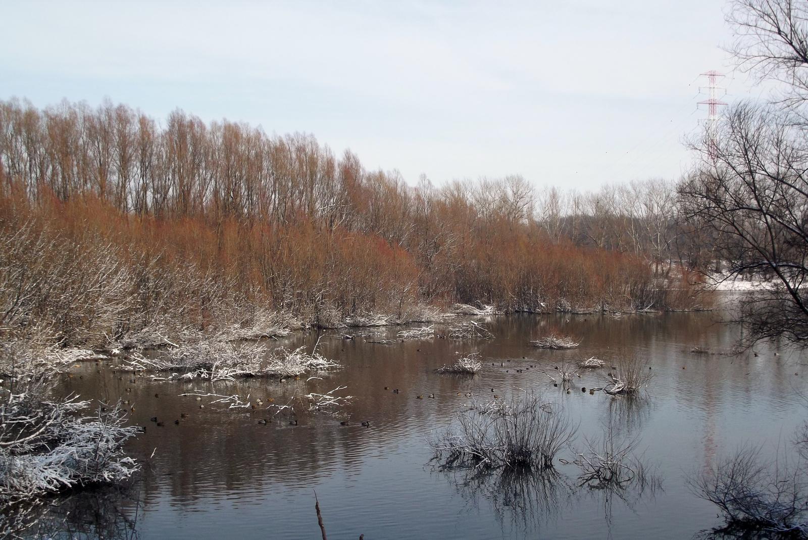 Téli kacsa-szállás