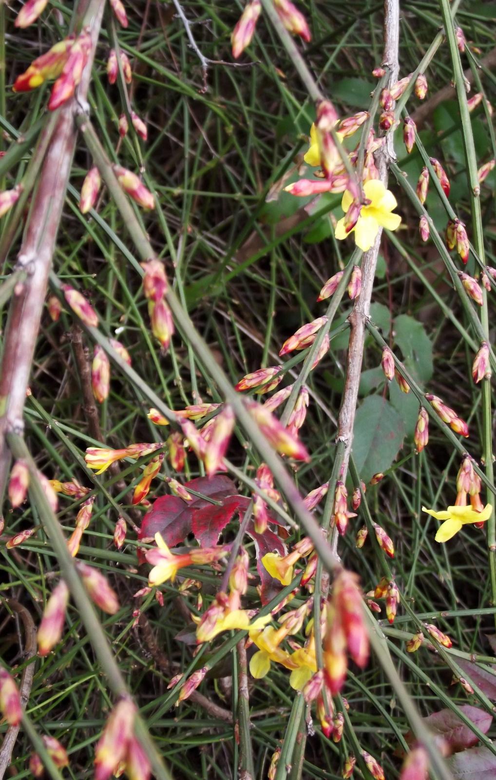 Virágzó bokrocska