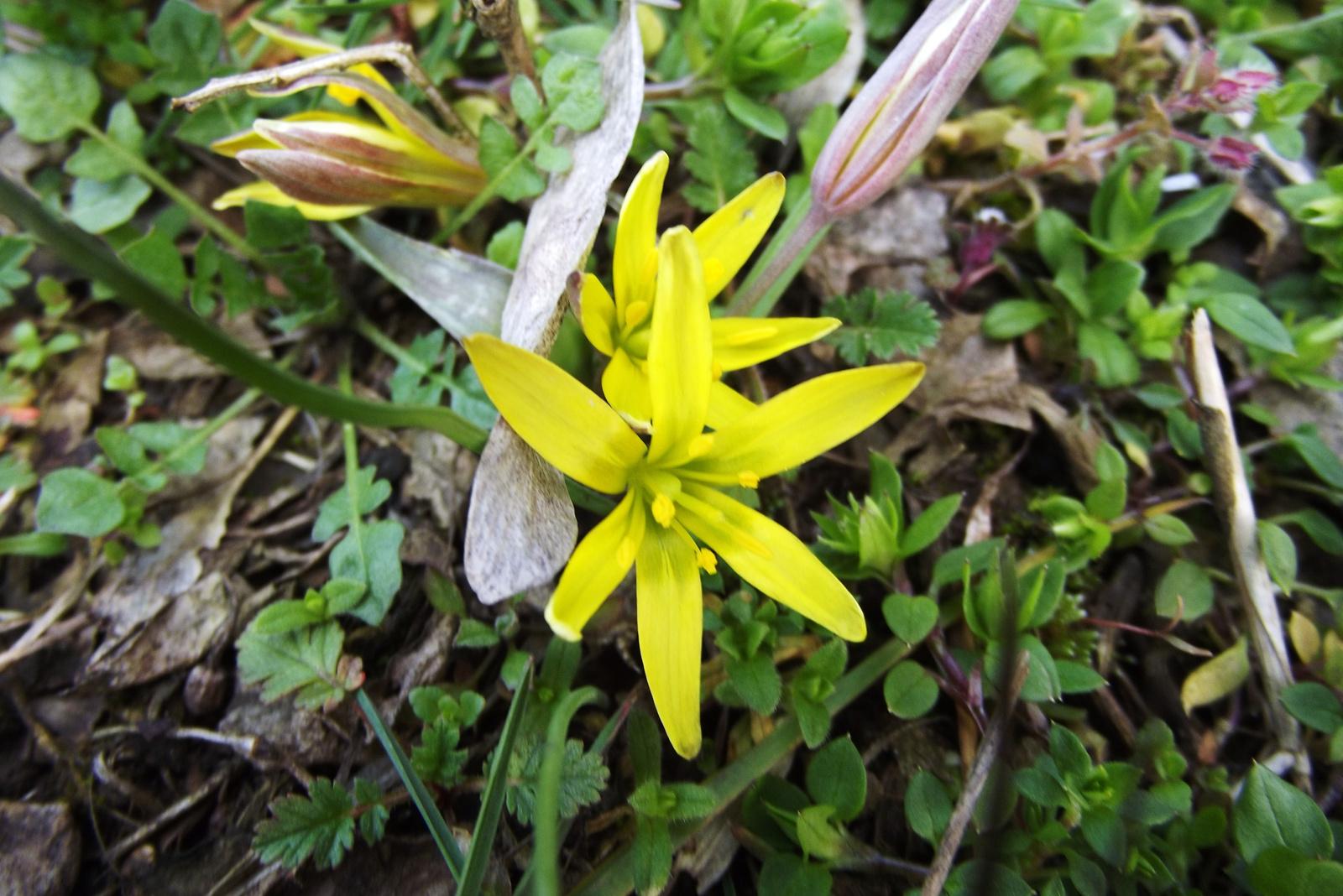 Tavaszi apróságok (5)