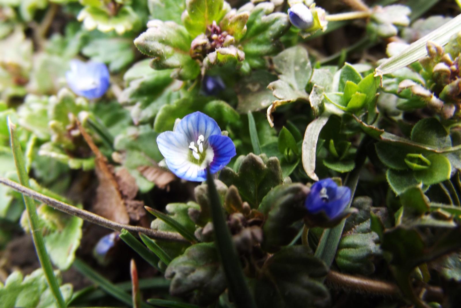 Tavaszi apróságok (9)