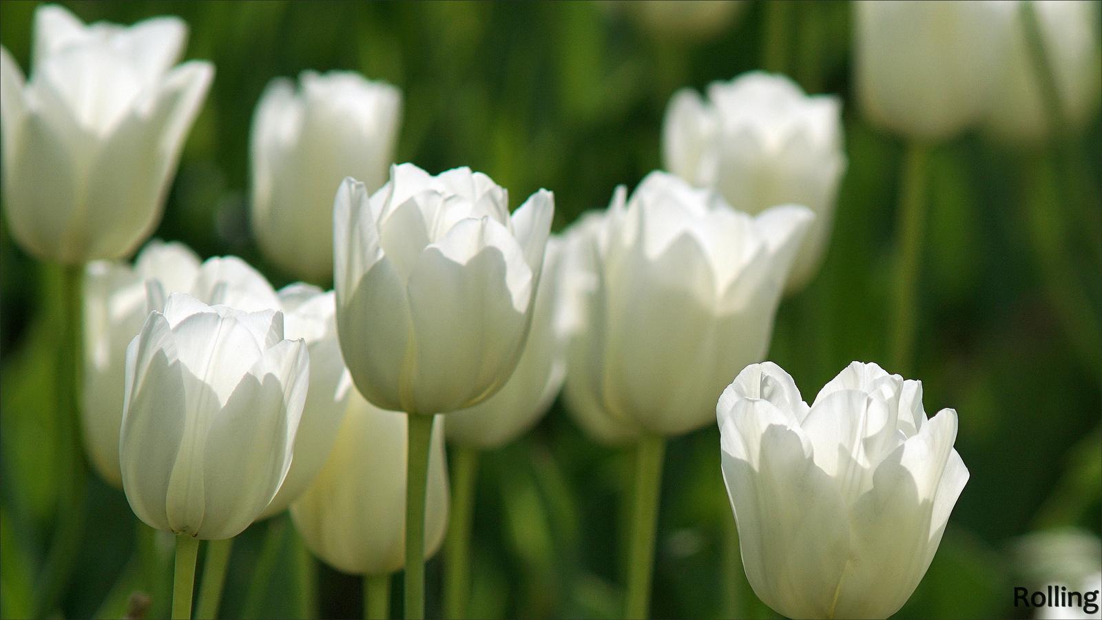 Tavaszi fényben,,,