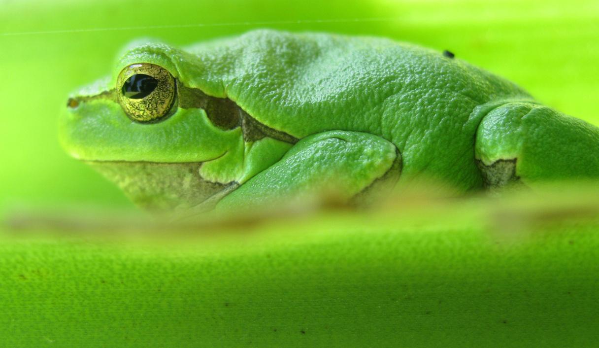 Zöld hátán zöld
